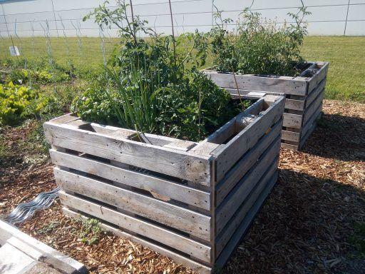 Hochbeet aus Paletten bauen #palettengarten