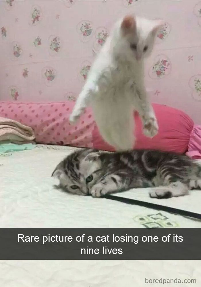 159 Hilarious Cat Snapchats That Will Leave You With The Biggest Smile (New Pics)