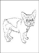 malvorlagen französische bulldogge zum drucken | ausmalbilder kostenlos und gratis malvorlagen