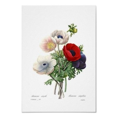 Anemonies Poster by Botany_Boy