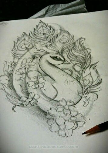 Peacock pencil drawing