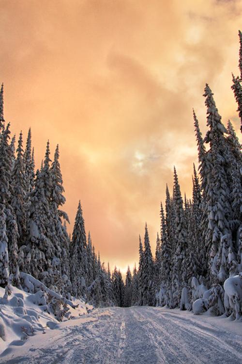 snowy road ~ By Jaclyn Tanemura