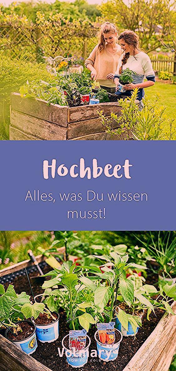 Photo of Hochbeet – Alles, was Du wissen musst!