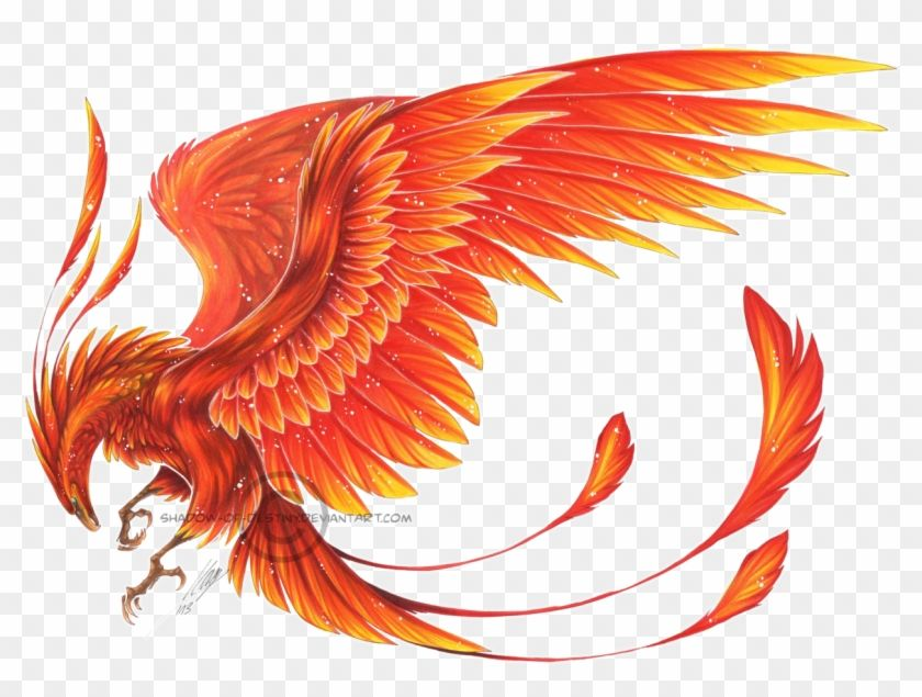 Find Hd Phoenix Bird Hd Png Download To Search And Download More Free Transparent Png Images Phoenix Bird Art Phoenix Artwork Phoenix Drawing