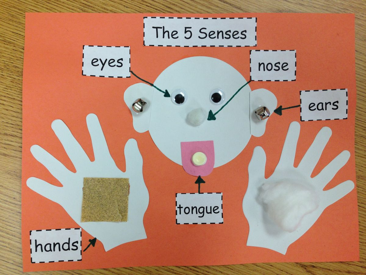 Our Five Senses Craftivity