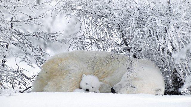 Epingle Par Annie Nochez Sur Bear Photo Animaux Animaux Oursons Polaires