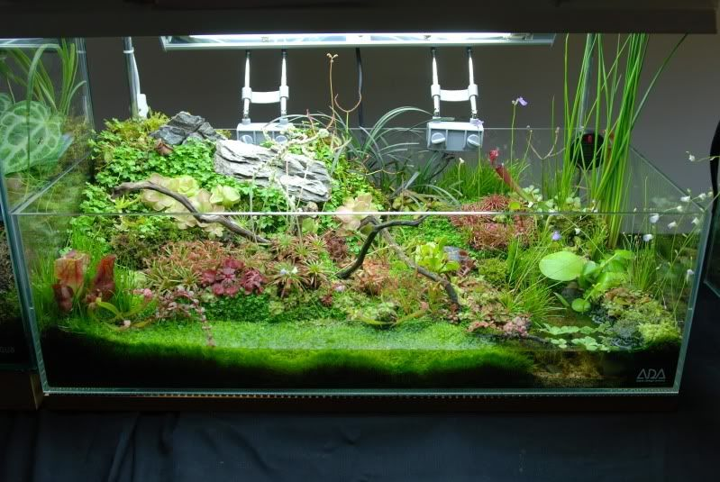 nano aquarium with carnivorous plants fish aquarium stuff pinterest aquarium meerwasser. Black Bedroom Furniture Sets. Home Design Ideas