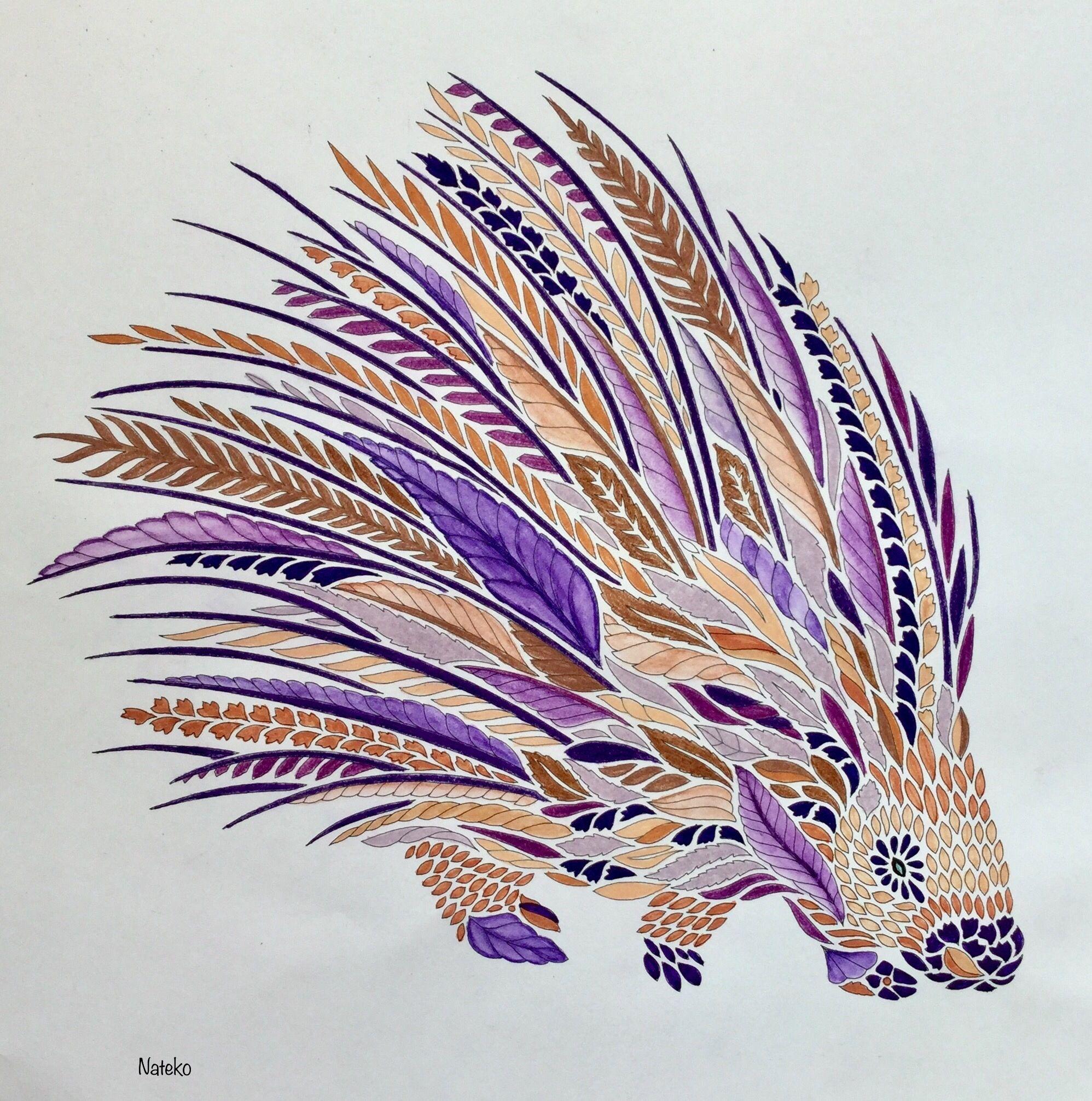 My Coloring Millie Marotta Curious Creatures Porcupine Porc Epic