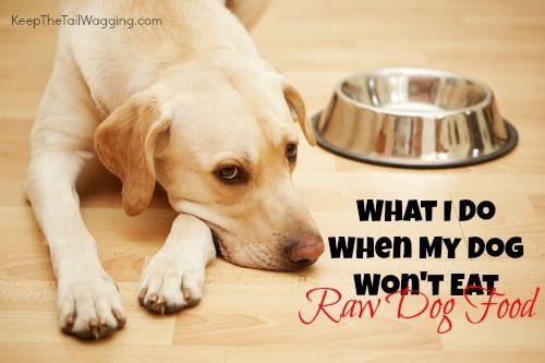 What I Do When My Dog Won T Eat Raw Dog Food My Dog Wont Eat
