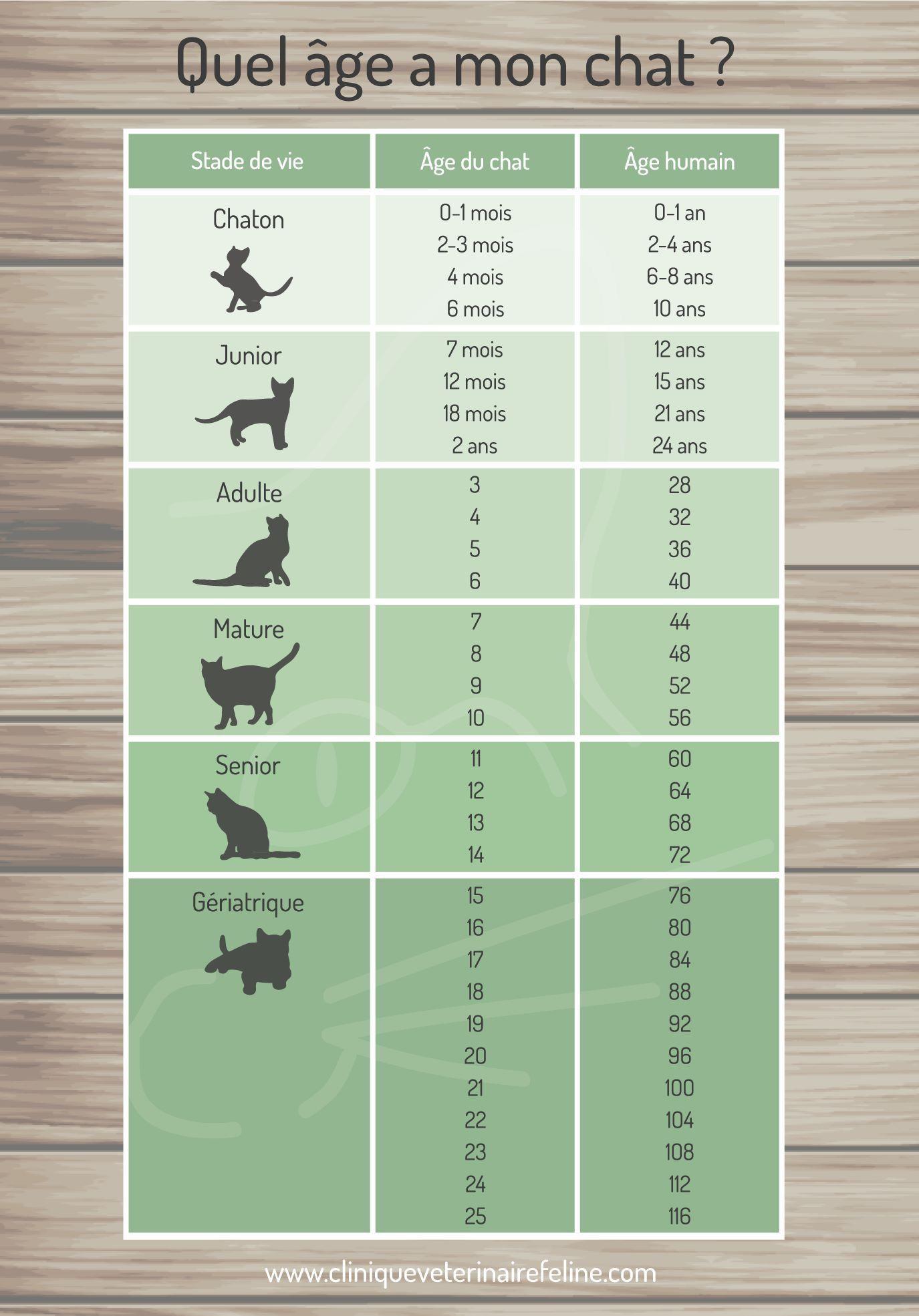 Comment Calculer L'âge D'un Chat : comment, calculer, l'âge, Chat,, Comprendre, Trucs