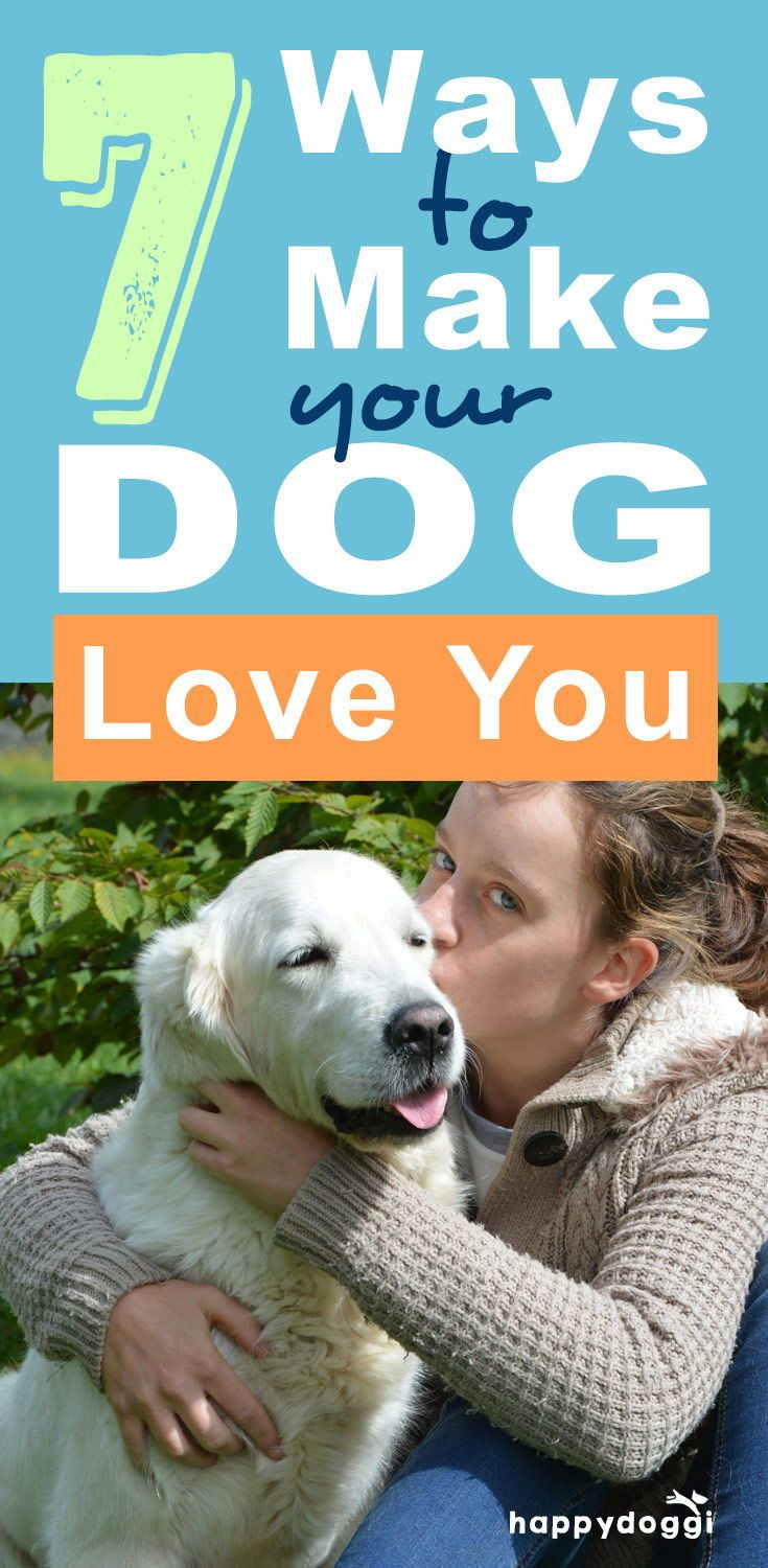 Communication on this topic: How to Make a Dog Love You, how-to-make-a-dog-love-you/