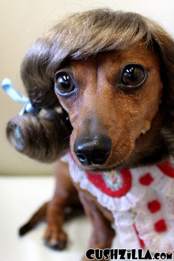 Little Dog With Wig Dog Wig Cat Wig Cushzilla Brunette