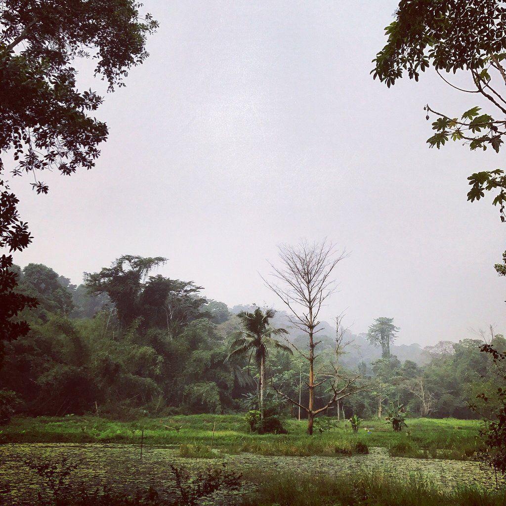Banco National Park Abidjan 2018 All You Need To Know Before You Go With Photos Tripadvisor National Parks Trip Advisor Ivory Coast