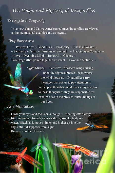 Magic And Mystery Of Dragonflies By Lisa Redfern Dragonfly Quotes Dragonfly Meaning Dragonfly