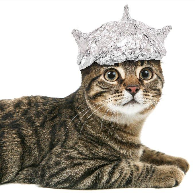 11 El Gato Malo Boriquagato Twitter Tin Foil Hat Pretty Cats Tin Foil