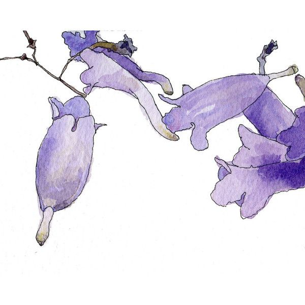 Small Jacaranda Tattoo: Purple Jacaranda, Watercolor Botanical Illustration, Art