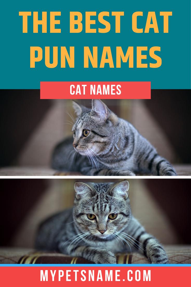 Best Cat Pun Names In 2020 Cat Puns Cat Pun Names Cool Pet Names
