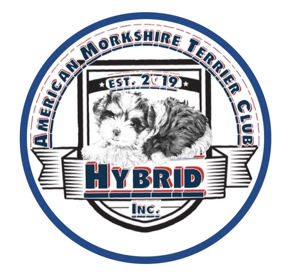 American Morkshire Terrier Club Inc The American Morkshire
