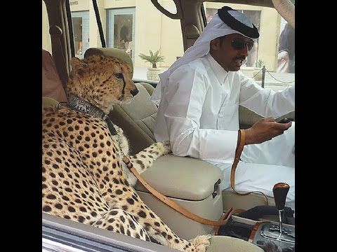 20 Things That Probably Only Happen in Dubai