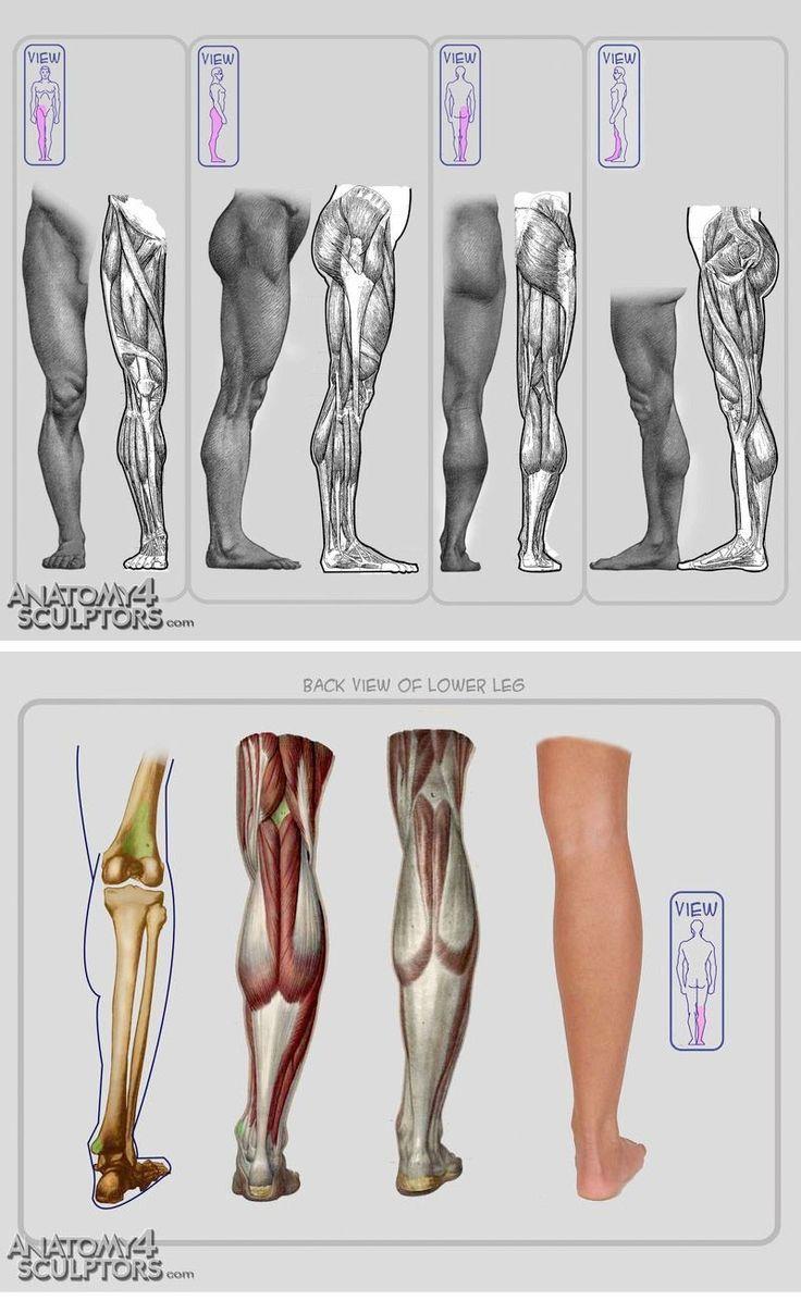 jambe anatomie | dessin anatomie | Pinterest