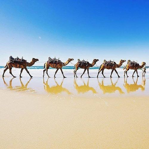 Hotels-live.com/pages/hotels-pas-chers - Good morning from Lighthouse Beach at @PortMacquarie.... where seeing camels walking along the beach is not an unusual sight! This coastal town in @visitnsw is known for its beautiful beaches scenic drives ancien