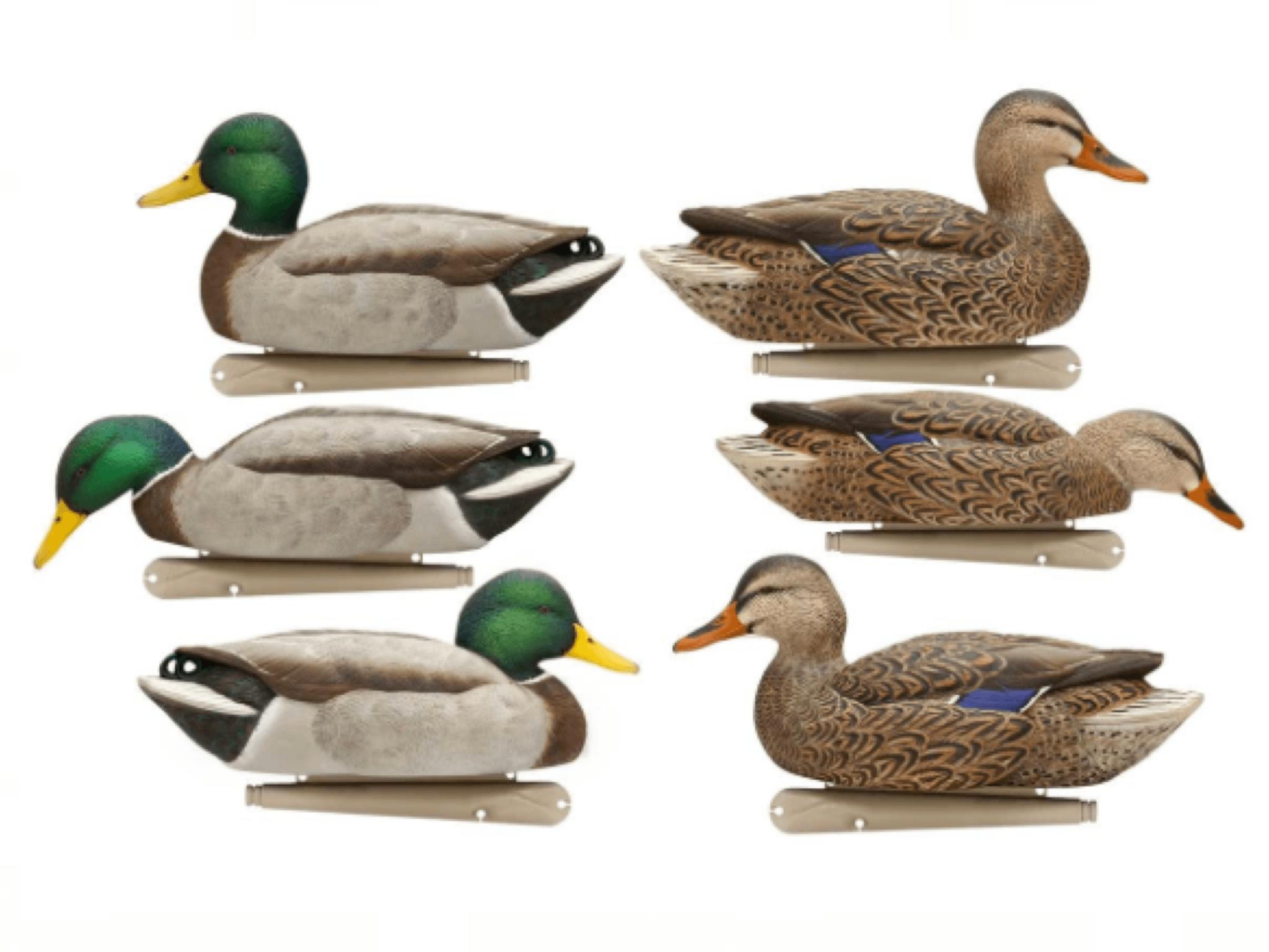 AvianX Topflight Fusion 6 Pack Mallards Duck decoys