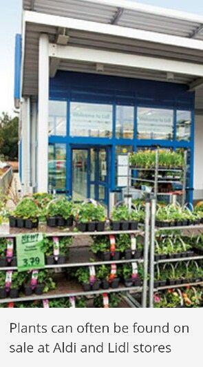 Aldi Lidl Plants Plants Garden Indoor Plants 400 x 300