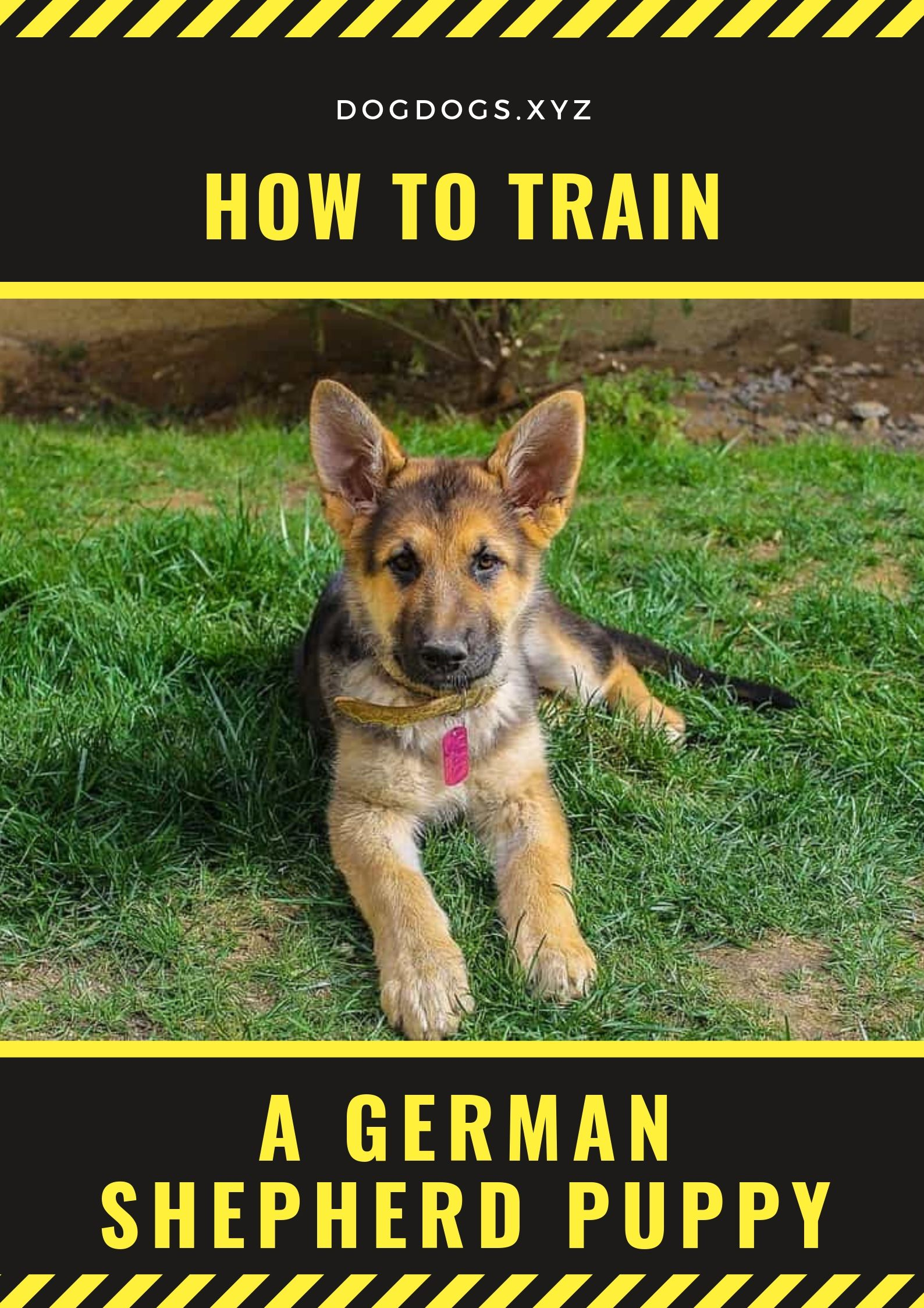How To Train A German Shepherd Puppy German Shepherd Puppies