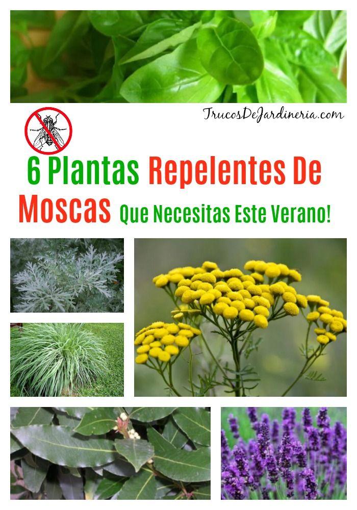 6 Plantas Repelentes De Moscas Que Deberías Tener Alrededor De Tu Casa