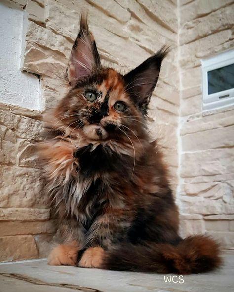 Pin di Maura su Gatti | Gattini, Gatti e Animali