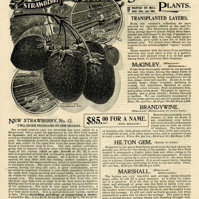 OldDesignShop_Pg172Strawberries