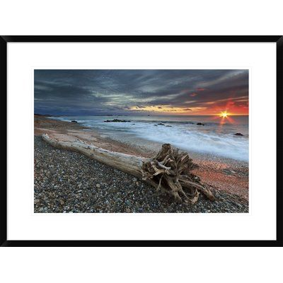 "East Urban Home 'Sakonnet Driftwood' Photographic Print Format: Collins Black Framed, Matte Color: Bright White, Size: 16"" H x 24"" W"