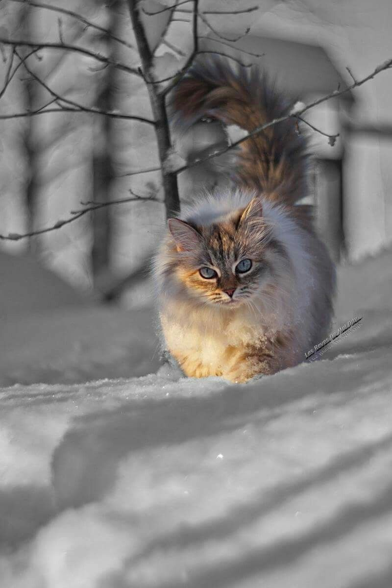 Pin by lavee lavender on Cats and Dogs Pinterest Cat Kitty and