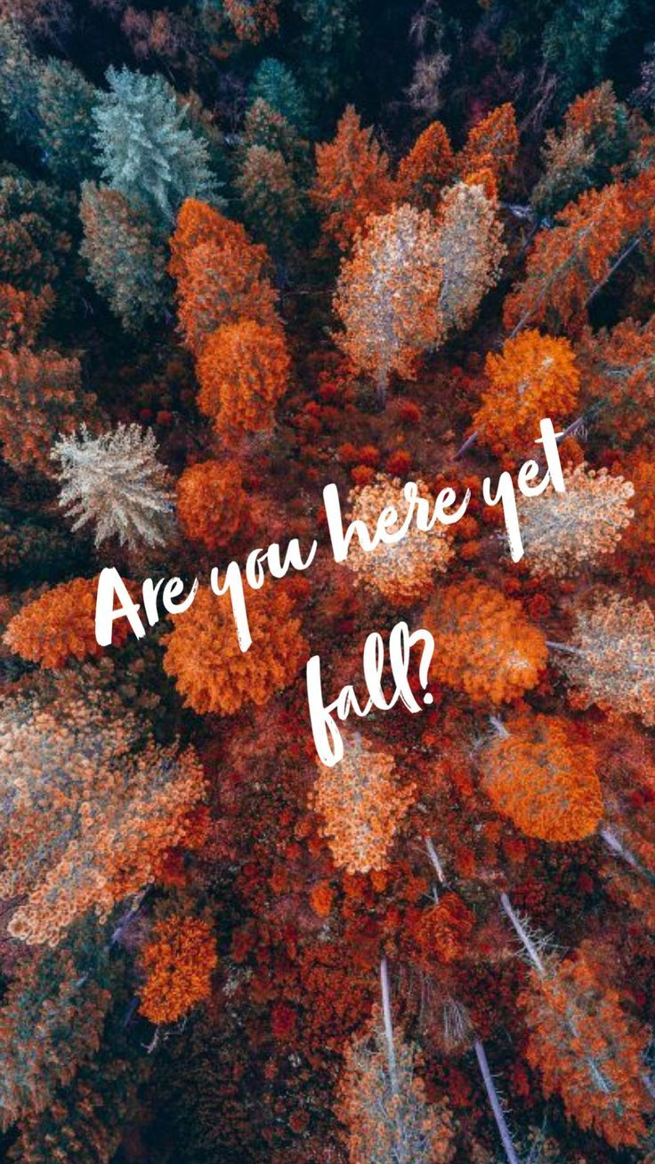 autumn trees  Autumn quotes, Fall wallpaper, Fall background