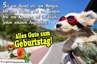 Geburtstagswunsche Fur Hunde Geburtstagswunsche Hund Geburtstag Wunsche Spruche Zum Geburtstag