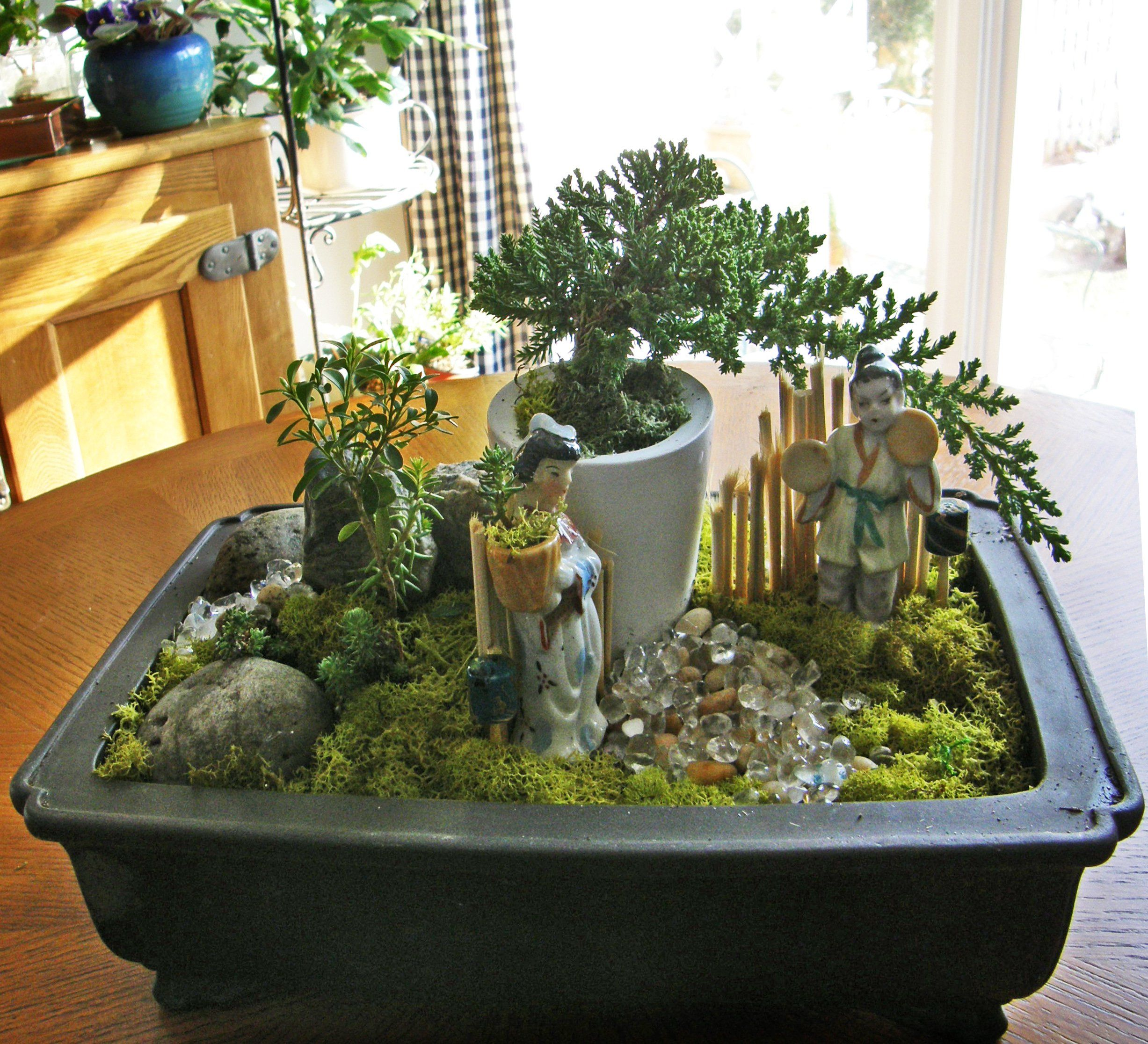 how to make a bonsai dish garden bonsai pinterest