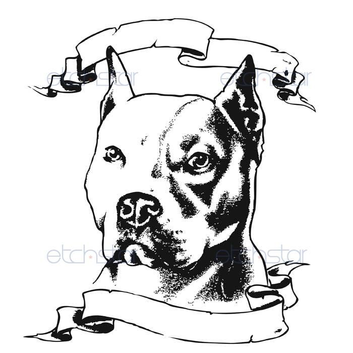 Pitbull Head Drawings Images
