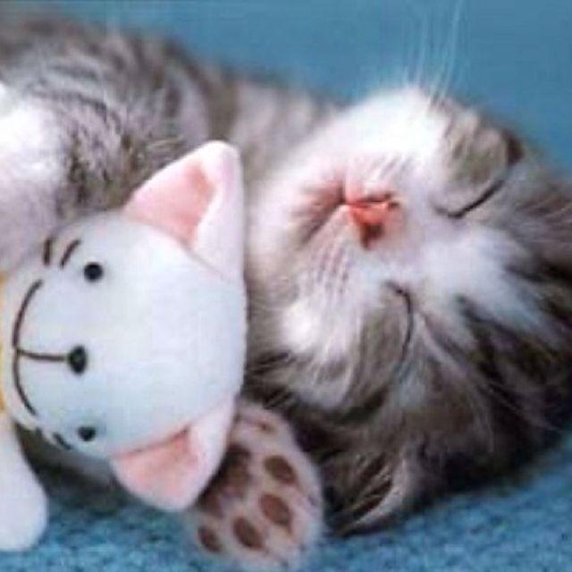 Открытки мужчине спокойной ночи сладких снов целую тебя нежно нежно
