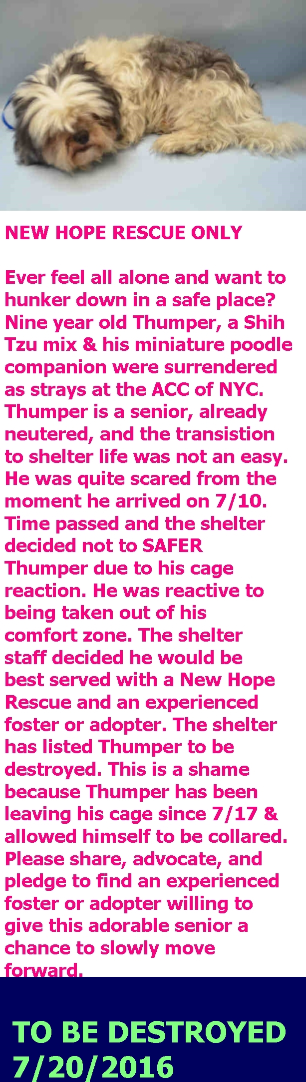 SAFE 7-21-2016 by Pitties.Love.Peace. --- Brooklyn Center  My name is THUMPER. My Animal ID # is A0876804. I am a neutered male white and gray shih tzu mix. The shelter thinks I am about 9 YEARS old.  I came in the shelter as a STRAY on 07/10/2016 from NY 11210, owner surrender reason stated was STRAY. http://nycdogs.urgentpodr.org/thumper-a0876804/