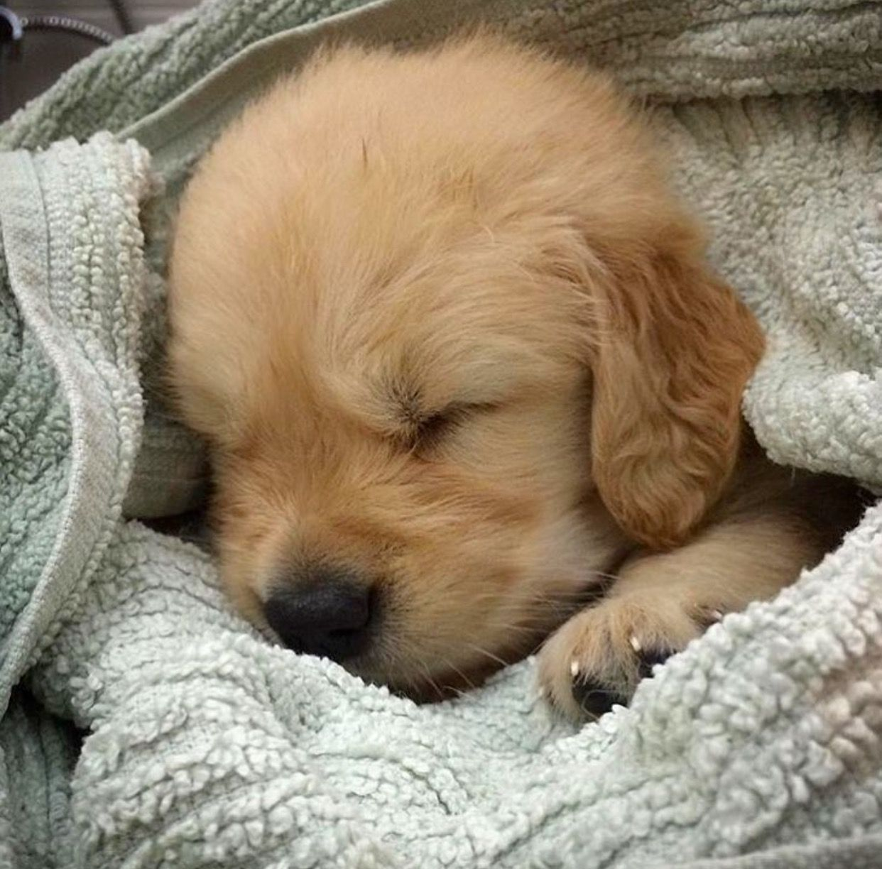 Pin By Christine Bartlett On Pups Cute Baby Animals Cute