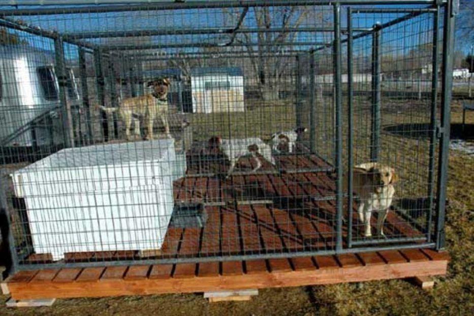 Outdoor Dog Run Flooring Eflooring In Tasty Kennel Ideas Doghousekennel