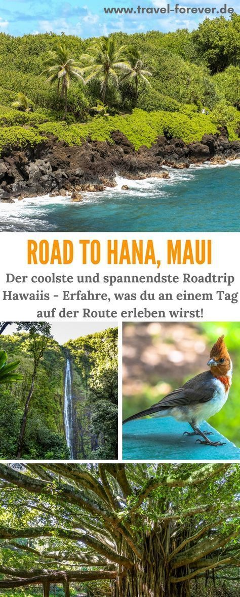 Road to Hana - Discover Maui on Hawaii's most beautiful route! -  Road to Hana – This is the name of the impressive route on the east coast of Maui. What you can e - #animationideas #babycaretips #beautiful #bookshelfdecor #DestinationWedding #discover #diybedroomdecor #diyhomedecorlighting #dreamhouse #farmhousedecor #Foodietravel #Hana #hawaii #Hawaii39s #homeschoolingideas #Honeymoon #kidssnacks #Maui #Road #route