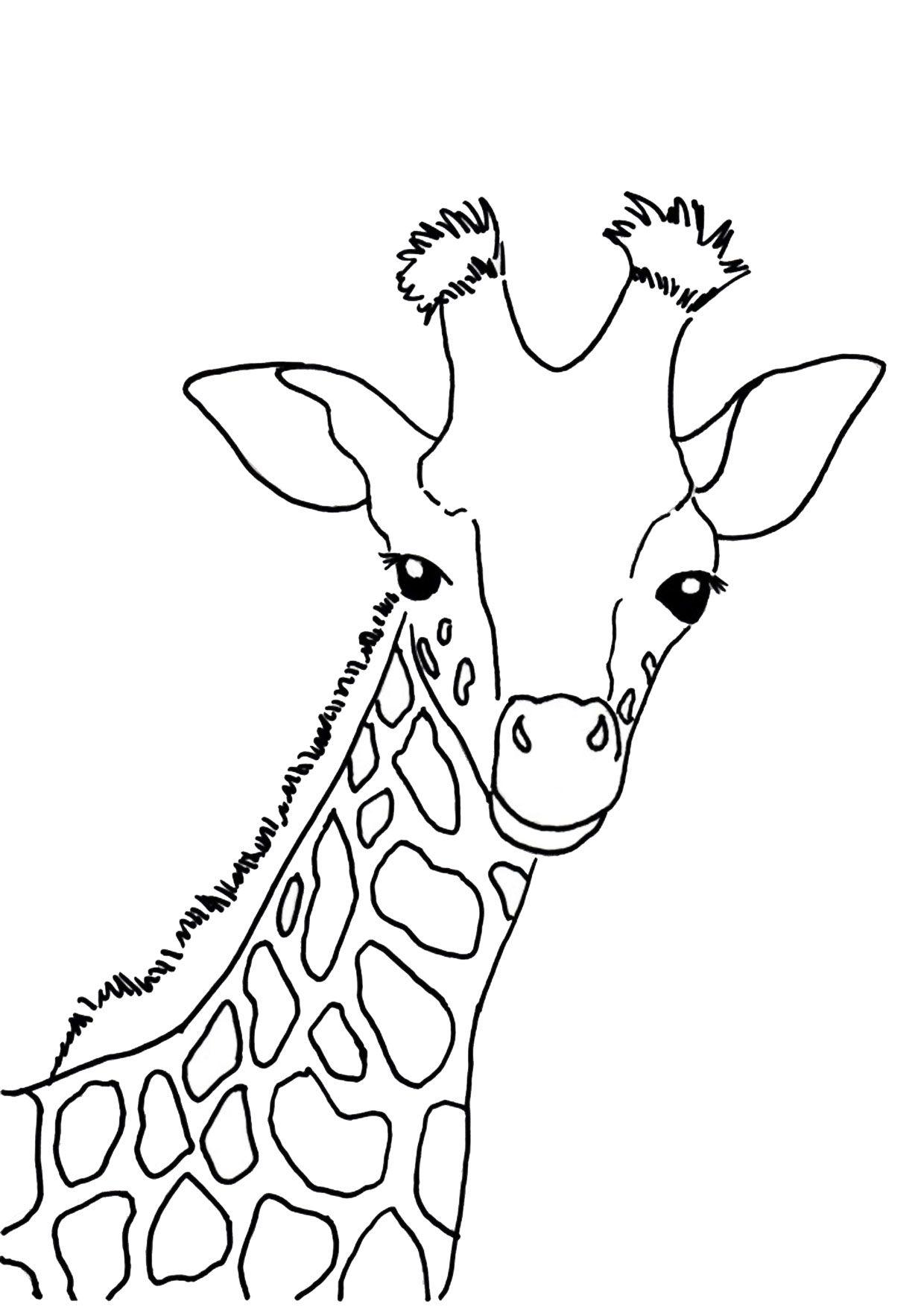 30 Disegni Di Giraffe Da Colorare Giraffe Drawing Cartoon