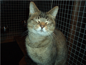 Can you offer Gem a loving home? Cat adoption, Cats, Feline