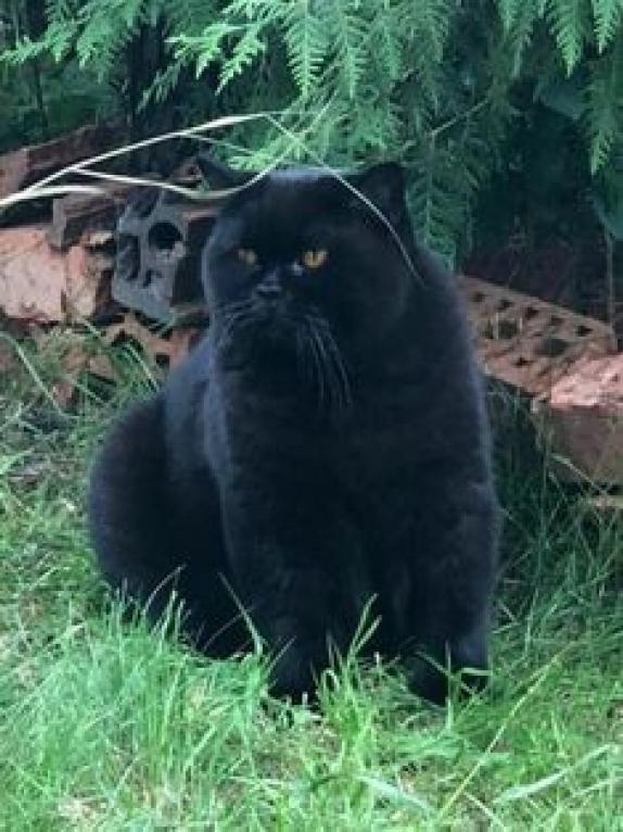 Blackcat Feline Feline Noir Cute Animals Fluffy Black Cat Beautiful Cats