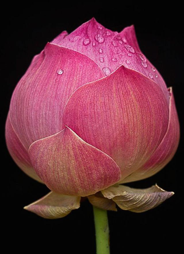 Exotic Flowers For Your Valentine And Their Meaning   Playbuzz