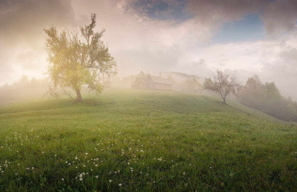 Карпаты весной