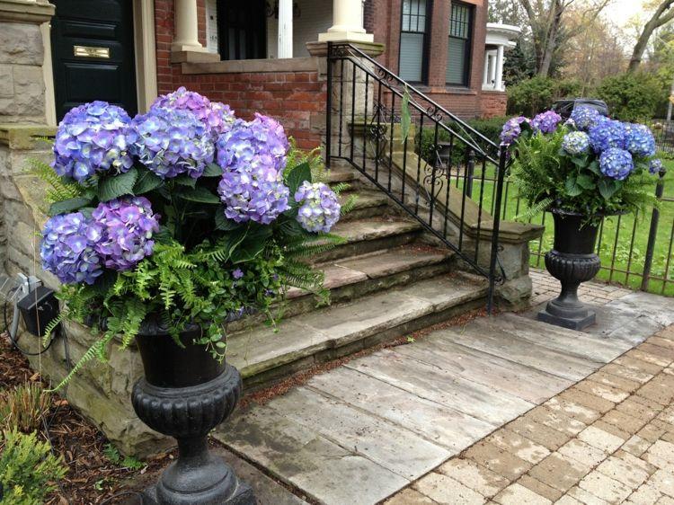 Cuidados dela hortensia azul en maceta casa dise o - Hortensias cuidados maceta ...