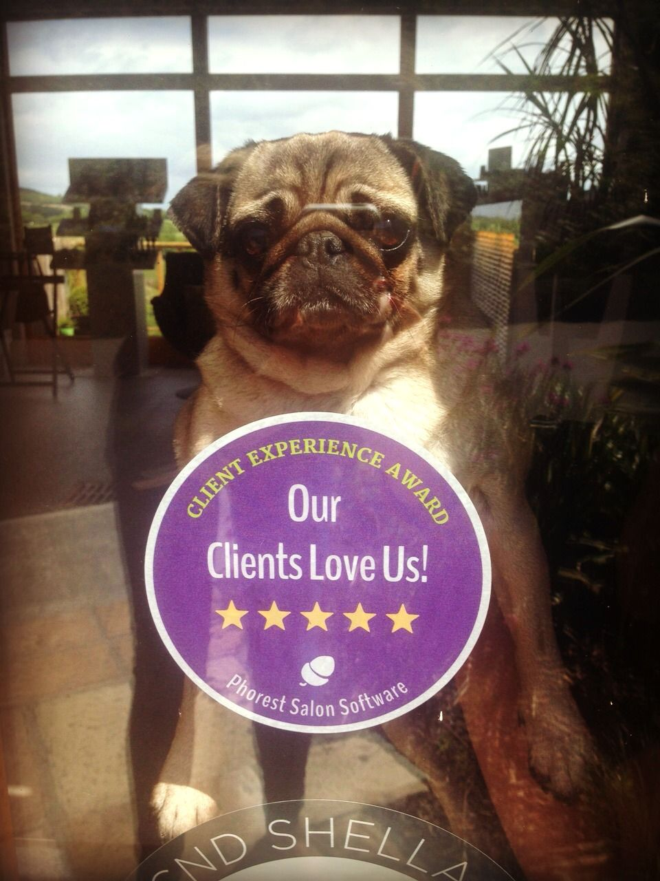 Sadie our #spa #pug says thanks! Our clients fab reviews have placed us as one of the top-rated salons in the UK & Ireland! @phorestss #rainforest #spa #dayspa #pug #hug #letsgrow #beauty #reviews