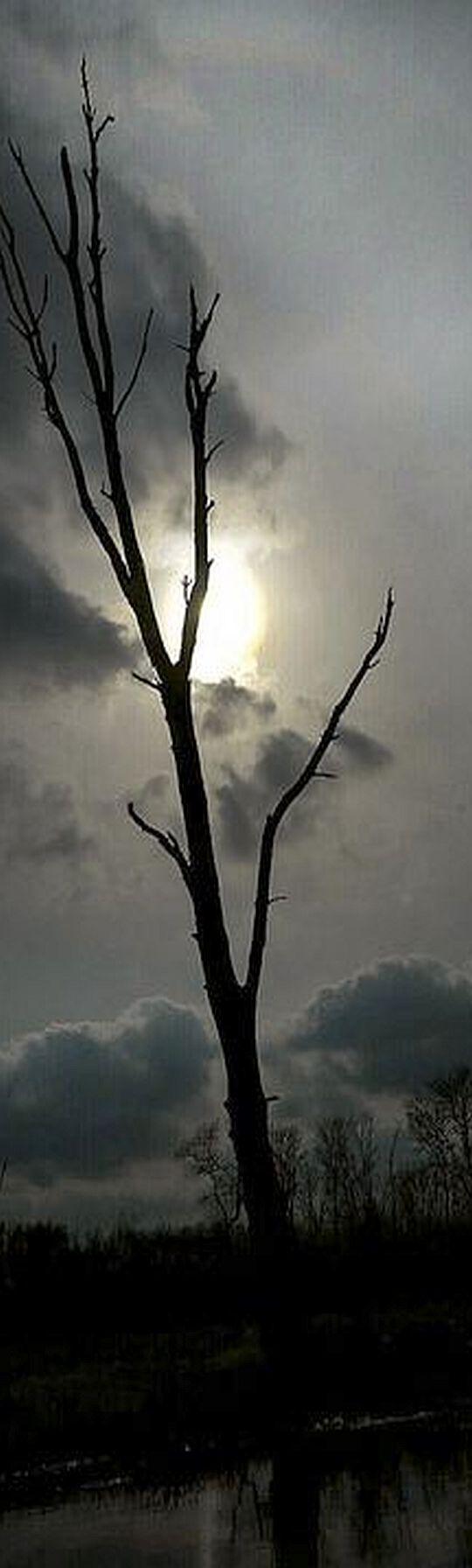 MYSTERY LANDSCAPE - TREE  #photo by Alyssa Elefteriou #fog foggy